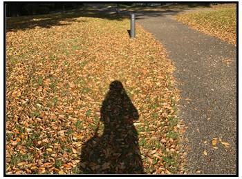 秋の散歩写真